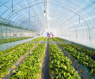 Heat Insulating Agricultural Membrane Picture